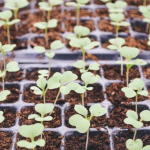 4 Practical Ways to Cultivate a Creative Church